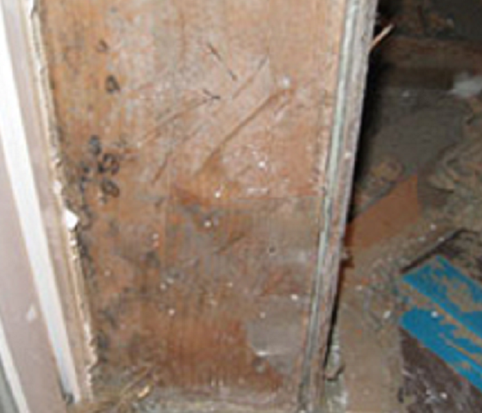 Mold In Basement Before