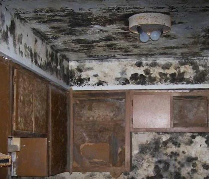 Extreme Case Of Mold