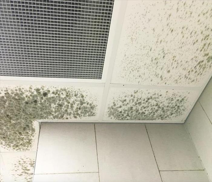 extensive mold damage on a drop ceiling